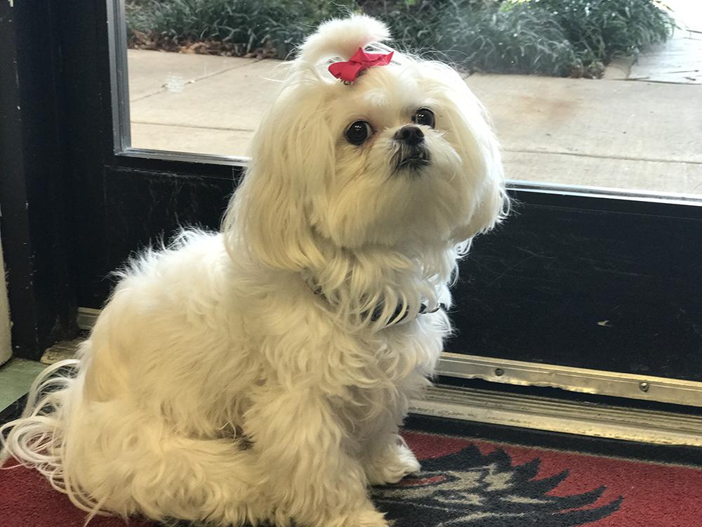 Chloe, the N Style mascot.